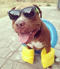 pit with floaties