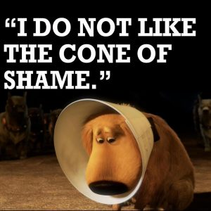 Cartoon type picture of a dog looking sad wearing an E collar - the cone of shame