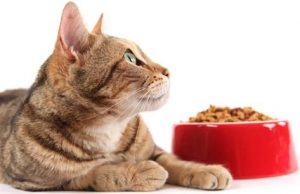 Blog - Food - Cat and food bowl