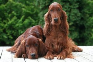 Blog - Food - Irish Setters