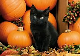 Black kitten sitting with pumpkins