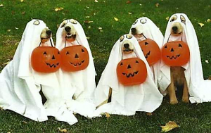 5 dogs dressed as ghosts holding plastic pumpkins in mouths