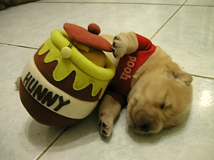 "Puppy wearing Pooh shirt holding ""Hunny"" jar"
