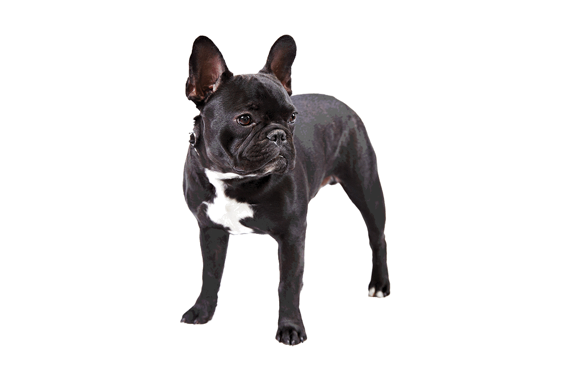 Top Ten Dog Breeds For Kids | Dupont Veterinary Clinic