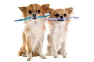 2 dogs sitting with toothbrush in mouth