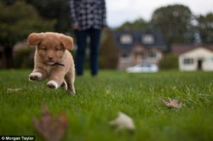 Young puppy running in grass