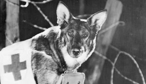 Photo of Rin Tin Tin