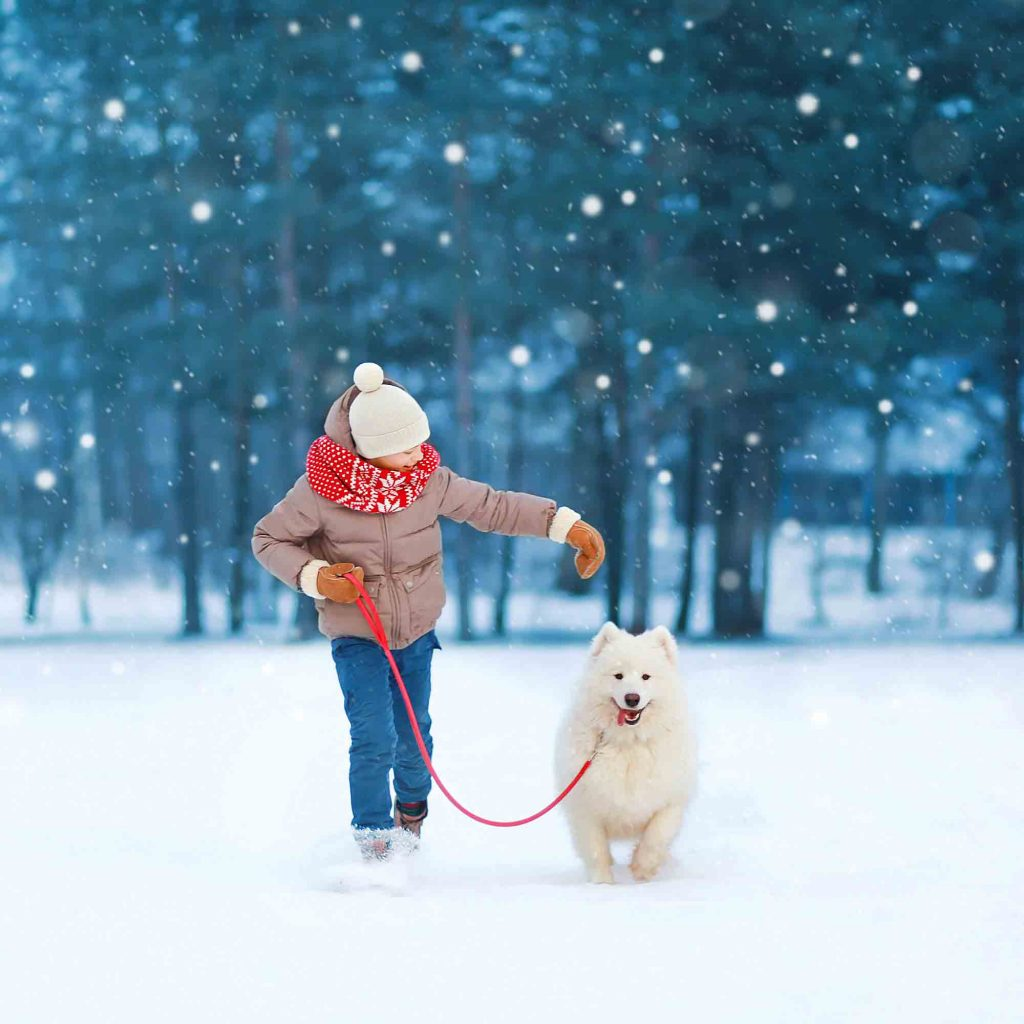 Child Walking Through Snow With White Dog On A Leash
