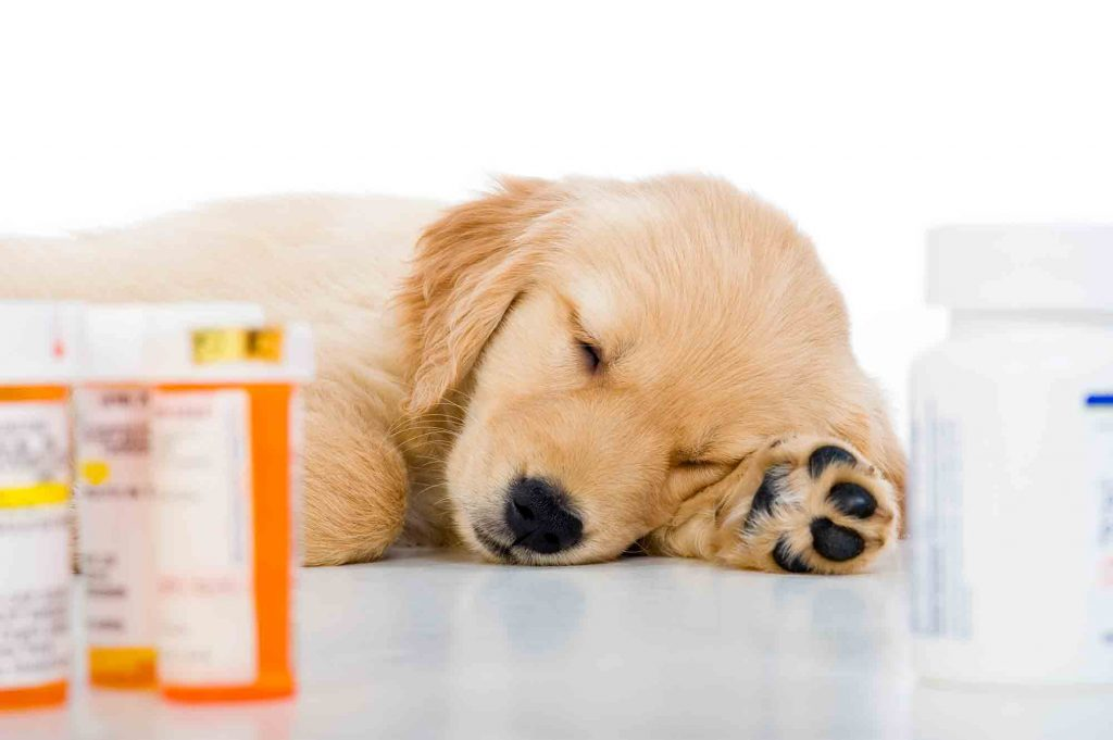 Sleeping Puppy Surrounded By Prescription Drug Bottles