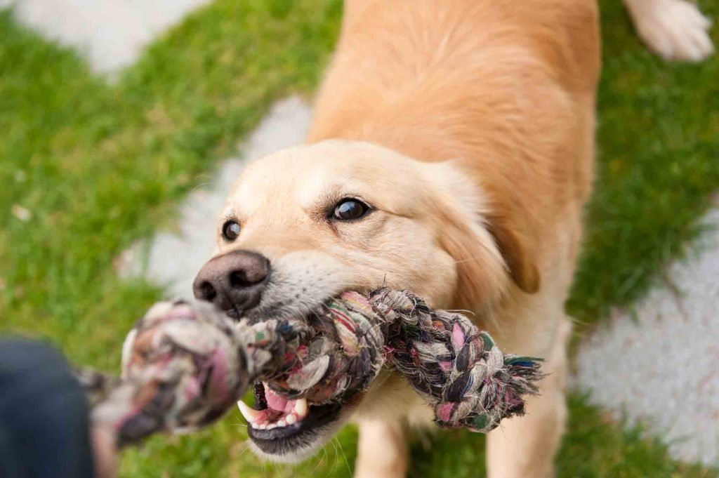 Dog Pulling On Rope Chew Toy