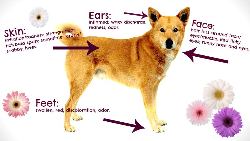 Dogs And Food Allergies