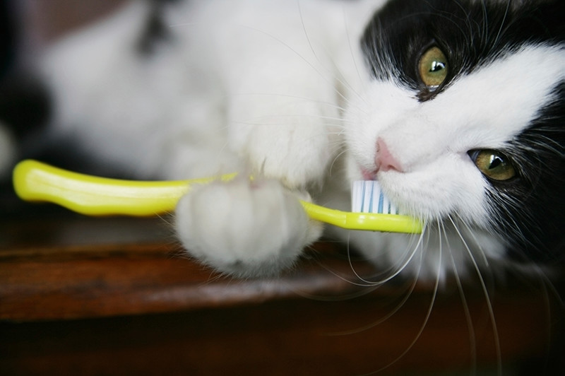 Kitten with Yellow Tooth Brush