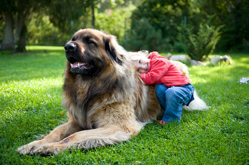 Small happy child hugs big dog